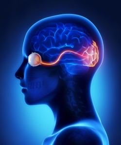 Eye is for the Brain